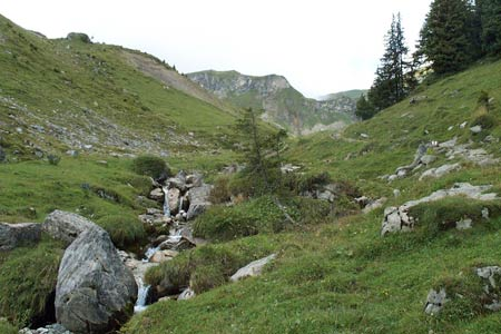 Alpine meadows between Sulwald and Suls