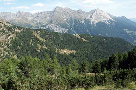 The landscape below Alp Grüm is much greener
