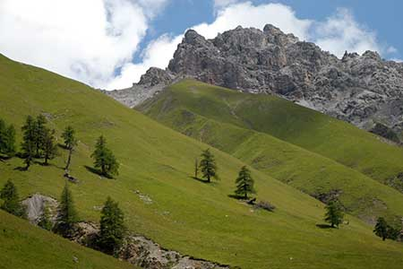 Alpine pastures in the Swiss National Park